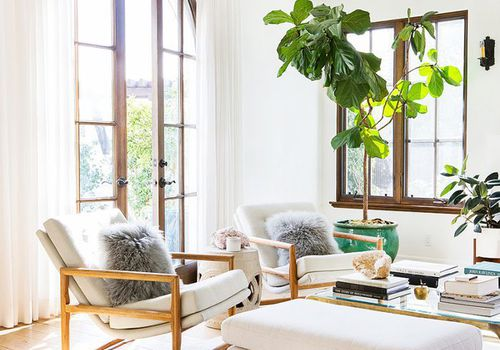 How to Decorate With Large Indoor Plants in Every Ho