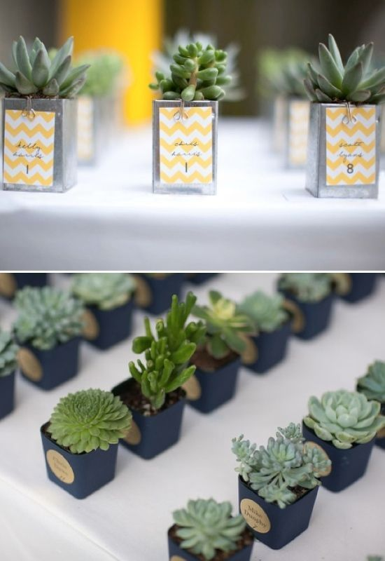15 The Best Cactus Wedding Ideas You Can Copy (With images .